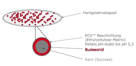 Abb. 1: Die ECX<sup>TM</sup> Technologie von Tillotts ermöglicht eine kontrollierte Wirkstoff-Freisetzung vom Ileum bis zum Kolon.